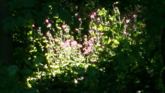 Image of flowers in a sunny spot