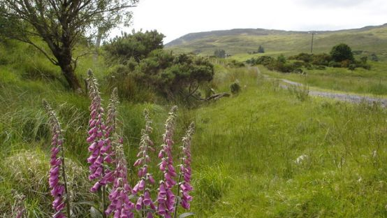 Image of fox-gloves and fields.
