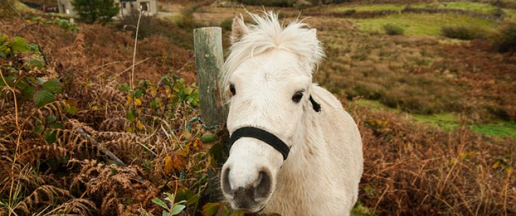 Image of white horse in field