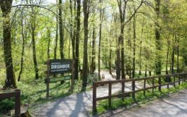 Drumboe Woods entrance