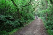 Leafy lane in Ards Forest Park